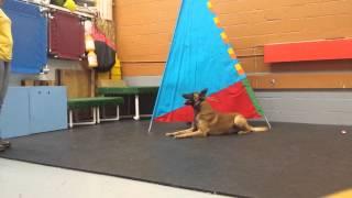 Baltimore Dog Trainer Food Refusal Training.