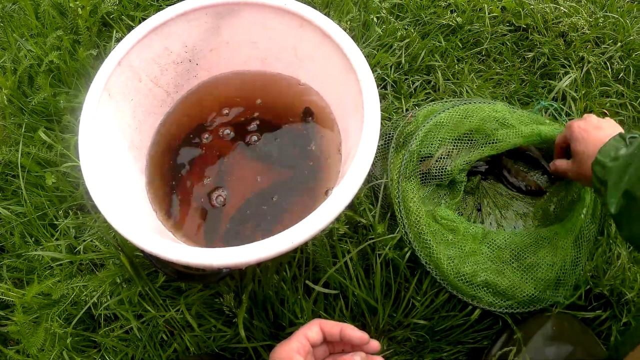 Ловля окуньков для переселения в другой водоём.