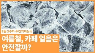 여름철, 카페 얼음 단속!! /  8월 3주 주간커피뉴…