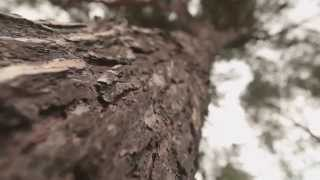 Wood-mizer Europe Corporate Video - 25 Years Anniversary