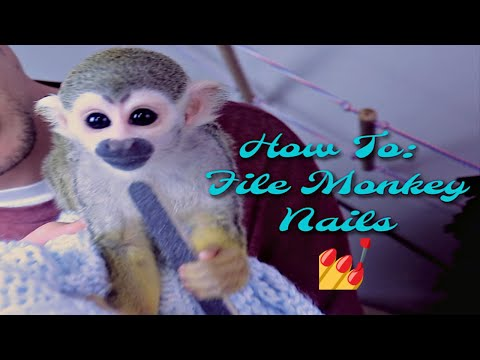 Baby Monkey oLLie How to Maintain Monkey Nails
