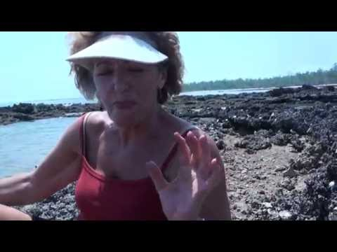 Picking oysters from the rocks on the Cobourg Peninsula