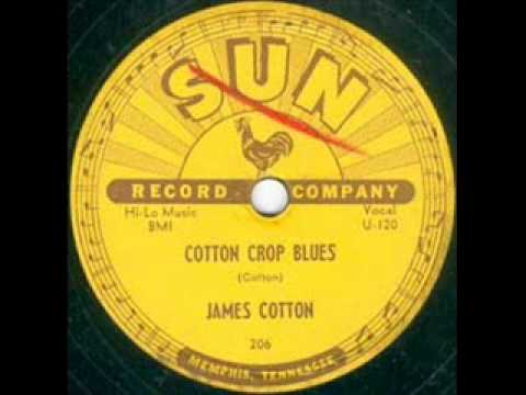 James Cotton Cotton Crop Blues  SUN 206