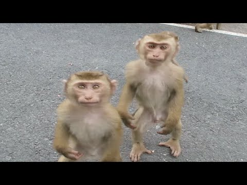 FEEDING WILD MONKEYS, PHUKET | SouthEast Asia