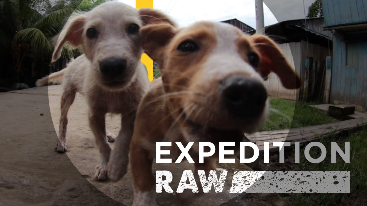 Puppies and Scientists Team Up Against Zika and Other Diseases | Expedition Raw