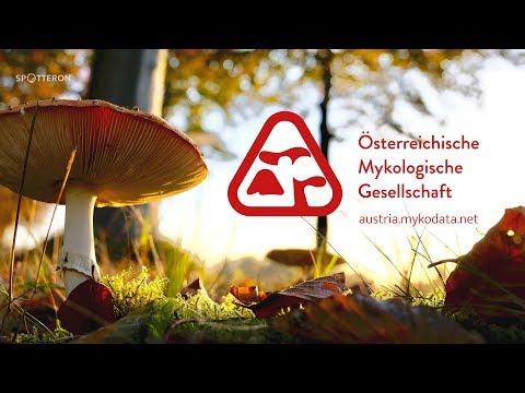 Let's meet Citizen Science! - Austrian Mycological Society ÖMG