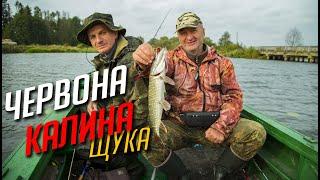 Шалений кльов щуки! Осіння рибалка! Знайомимось з водоймою! Ловля щуки на спиннинг осенью!
