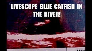 How I use #LIVESCOPE to catch #BlueCatfish in the #River!