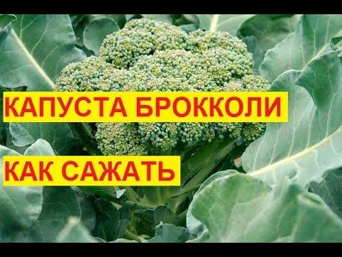 Выращивание кабачков —