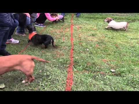 2015 Oakshade Wiener Dog Nationals