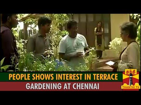 Thalainagaram : People Shows Interest in Terrace Gardening at Chennai - Thanthi TV