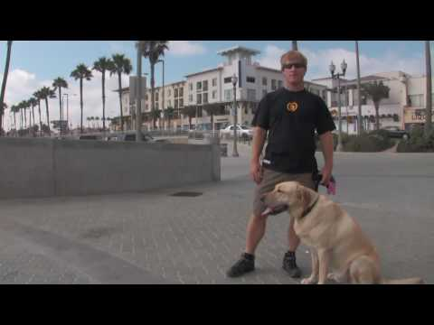 Dog-friendly Hotels In Huntington Beach, California