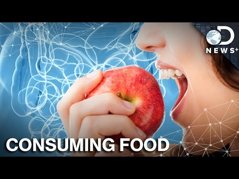 How Exactly Does Your Body Process Food?