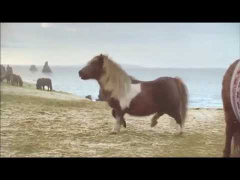 Three The Pony At Christmas Danceponydance Commercial 2013 Youtube