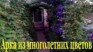 Туннель любви из многолетних цветов