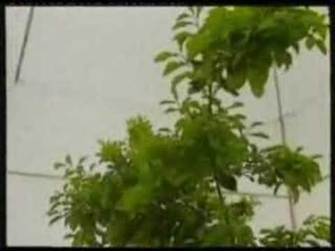 Tree Growth Caused By CO2 Increase