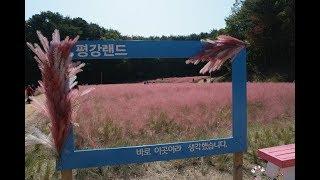포천 평강식물원 핑크뮬리360도 동영상촬영 평강랜드