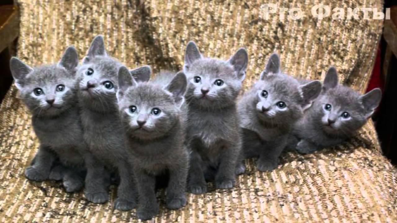 кошки красивые фото картинки