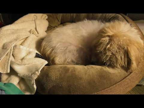 Dog Allergy Dog Allergies Cat Allergies