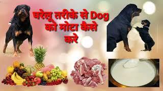 घरेलू तरीके से Dog को मोटा (Weight Grow) कैसे करें !! How To Grow Dog weight At home made !!