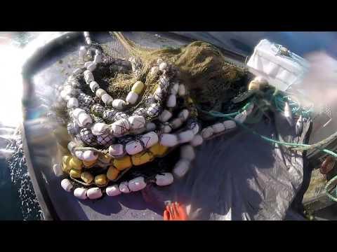 Commercial Salmon Fishing - Kodiak, AK