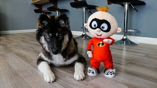 funny-dog-kakoa-vs-baby-jack-jack