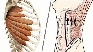 Ćwiczenie brzucha stabilizuje barki - dlaczego?