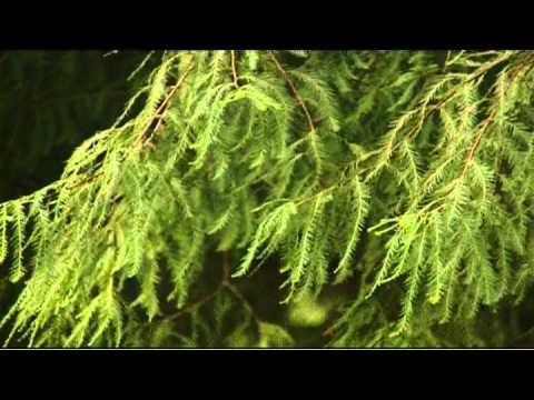 Tree Planning