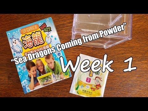 """sea-dragons-coming-from-powder!""-(chinese-bootleg-sea-monkeys)---week-1"