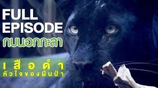 กบนอกกะลา : เสือดำ หัวใจของผืนป่า | FULL (26 เม.ย.61)