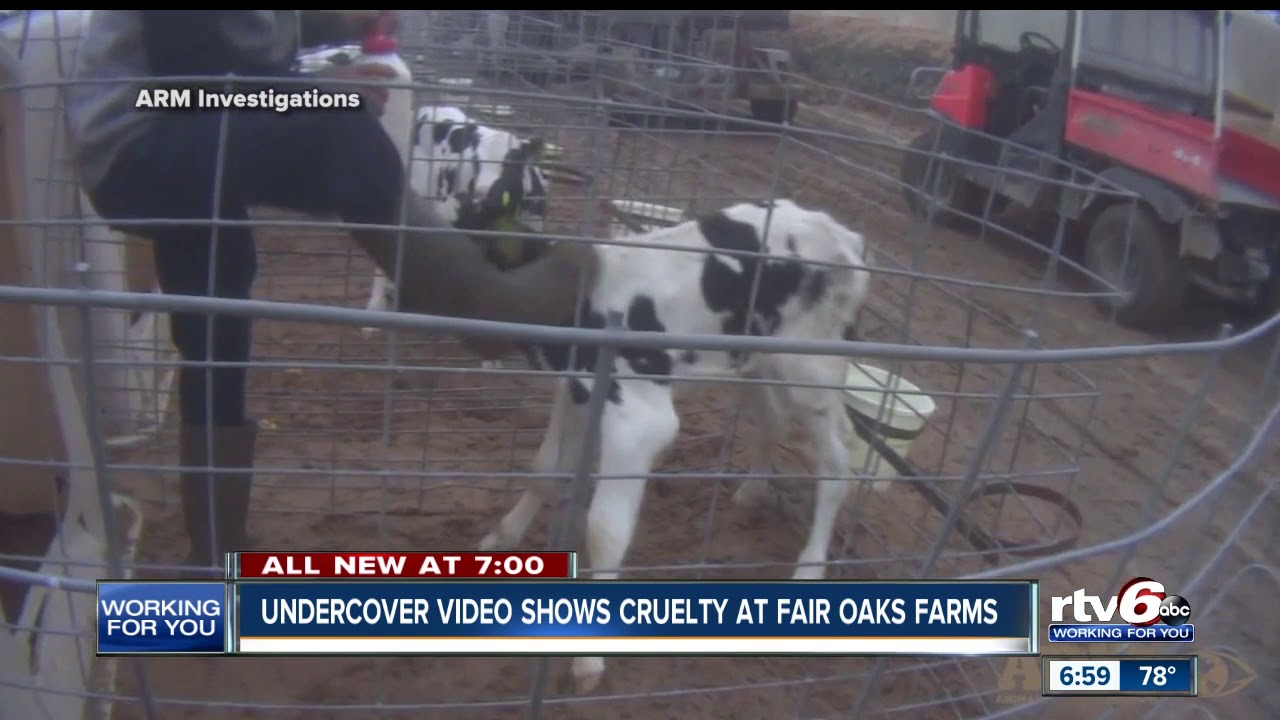 Animal Rights Group Releases Disturbing Video from Fair Oaks Farm