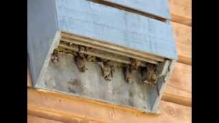 Bathouse - Where Do Bats Live - How To Attract Bats