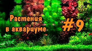 #9 Растения в аквариуме. Plants in the aquarium