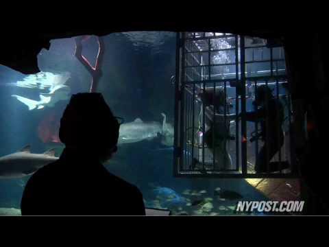 Wedding with Sharks - New York Post