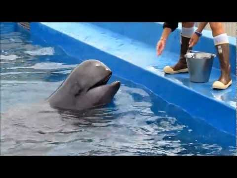 Back Stage at Seaworld - Sully the Pilot Whale