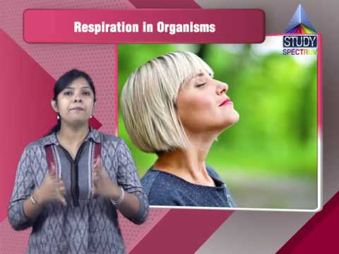 CBSE 7 Science   Respiration In Organism Ep 01