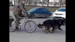 Велосипед с упряжкой