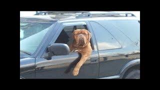 Топ 10 смешных видео с забавными животными - попробуйте не смеяться. NEW