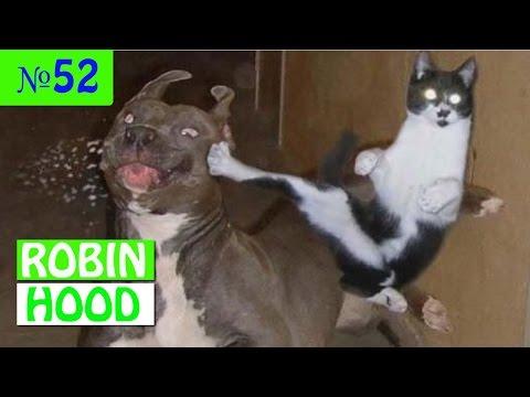 ПРИКОЛЫ 2017 с животными. Смешные Коты, Собаки, Попугаи // Funny Dogs Cats Compilation. Март №52