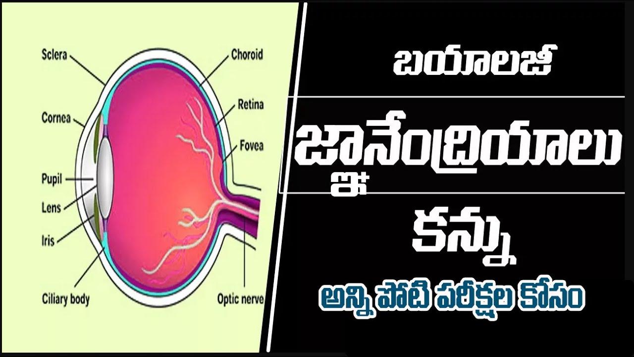 Download Tet Trt Dsc Human Eye Biology Telugu Medium 2829 Image Diagram
