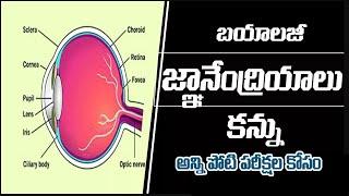 TET/TRT & DSC || Human Eye || Biology Telugu Medium