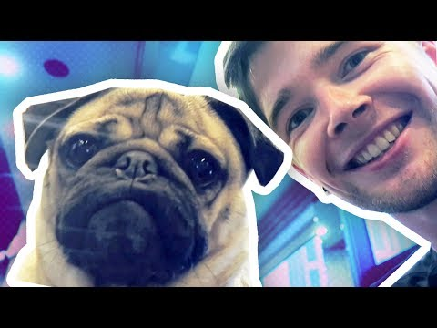MEETING THE WORLD'S MOST FAMOUS PUG!!!