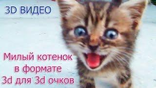 Забавное видео в формате 3d для 3d очков LG, Samsung, анаглиф: Милый маленький котенок Барсик.(Забавное видео в формате 3d для 3d очков LG, Samsung, анаглиф: Милый маленький котенок Барсик 20160822., 2016-08-26T13:16:30.000Z)