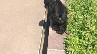 お散歩中です。なかなか歩かないです(^_^;A シニアなのでスローライフで...