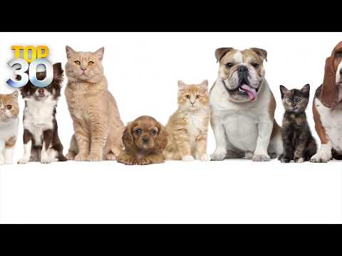 Dogs vs. Cats: Who's Smarter?
