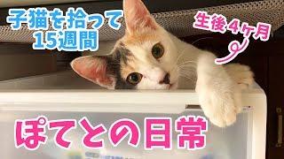子猫を拾って15週間・ぽてとの日常【生後4ヶ月】