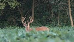 5 Tips For Better Deer Hunting Food Plots