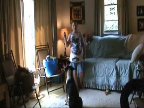 canine assisted play therapy sampler 1 -