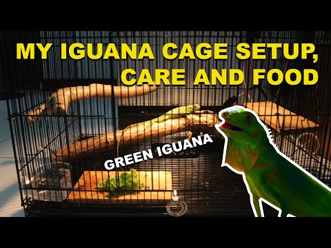 Iguana Cage Setup, Care, Food and Diet -  Ep. 1 (My First Green Iguana)