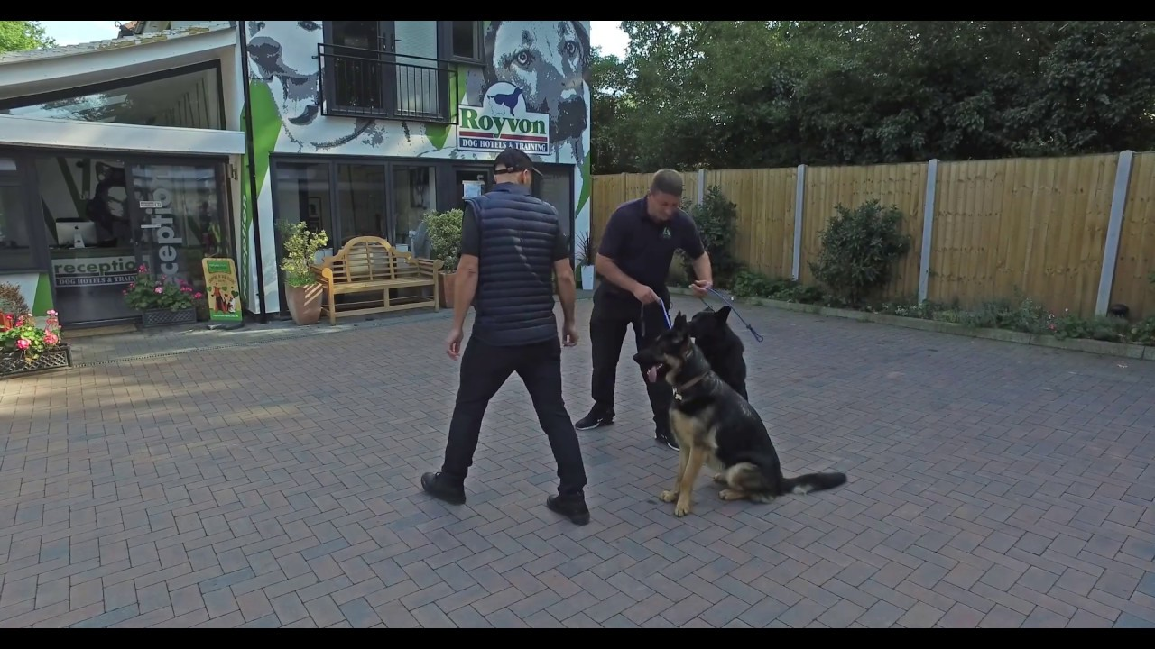 Royvon Dog Training and Hotels in Esher